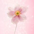 Pink Delight by SylviaCook