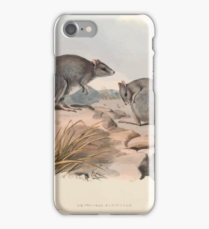 A monograph of the Macropodidæ or family of kangaroos John Gould 1842 029 Bettongia Cuniculus iPhone Case/Skin