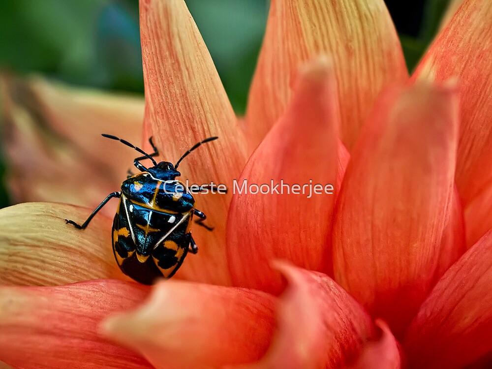 Fashion-conscious bug by Celeste Mookherjee