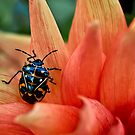 Fashion-conscious beetle by Celeste Mookherjee