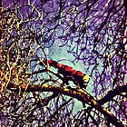 Red Panda in tree by Aconissa