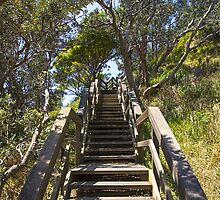 Stairs at  Port Maquarie NSW by Doug Cliff