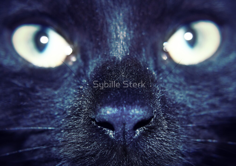 Essential Black Cat by Sybille Sterk