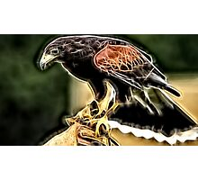 Wild nature - eagle #6 Photographic Print