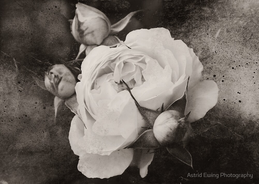 Mother and Babies Sepia by Astrid Ewing Photography