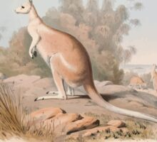 A monograph of the Macropodidæ or family of kangaroos John Gould 1842 004 Macropus Unguifer Sticker