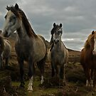 Wild Horses, Wales by Michiel Meyboom