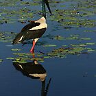 Jabiru at Kakadu by Carol James