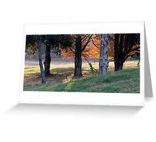 Backlit Trees In The Neighborhood Greeting Card