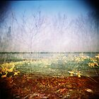 Holga sea of daffodils by redcow