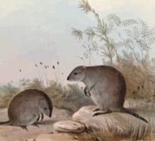A monograph of the Macropodidæ or family of kangaroos John Gould 1842 015 Hypsiprymnus Gilbertii Sticker