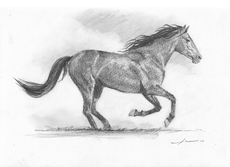 Galloping horse sketches - photo#14