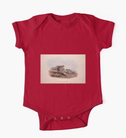 A monograph of the Macropodidæ or family of kangaroos John Gould 1842 012 Lagorchestes Lepoides One Piece - Short Sleeve