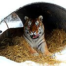 Tunnel Vision!!! by Larry Trupp