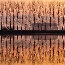 Reflections by Wonderful Tuscany Landscapes