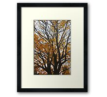 Canopy of Gold Framed Print