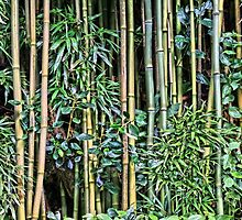 Bamboo by djphoto