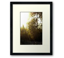 Highlands Hammock Dawn Framed Print
