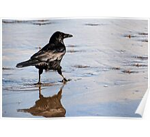 Crow Getting His Feet Wet At Lyme, Dorset UK Poster