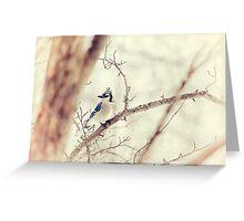 Blue Jay Winter Greeting Card