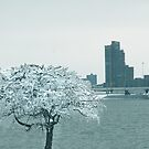 Louisville Ice  by LizzieMorrison