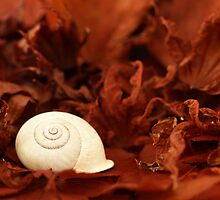 Autumn Dreams by Anne Schwaderer