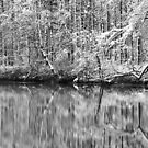 24.11.2015: Snowy Trees at the Lakeside by Petri Volanen