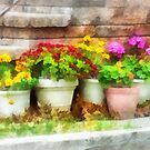 Flowerpots with Autumn Flowers by Susan Savad
