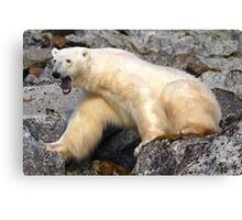 Polar bear in a Spitzberg fjord Canvas Print