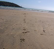 Dog pawprints in sand on beach, Salcombe, Devon, United Kingdom by silverportpics