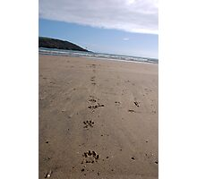 Dog pawprints in sand on beach, Salcombe, Devon, United Kingdom Photographic Print
