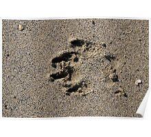 Dog pawprint in sand on beach, Salcombe, Devon, United Kingdom Poster