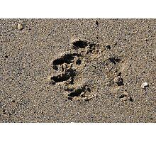 Dog pawprint in sand on beach, Salcombe, Devon, United Kingdom Photographic Print
