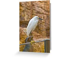 No Egrets! Greeting Card