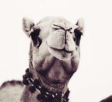 Camel  by sylvianik