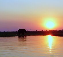 'Serenity At Sunset' - Chobe, Botswana by pennies4eles