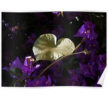 A Heart of Gold Leaf of Morning Glory Poster