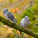 Autumn Pigeons by M.S. Photography & Art