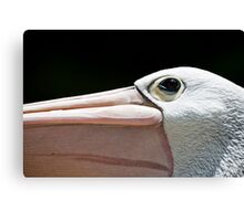 Eye of the Pelican Canvas Print