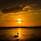 Pelican Sunset by Les Boucher