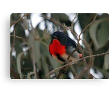 Mistletoebird Canvas Print