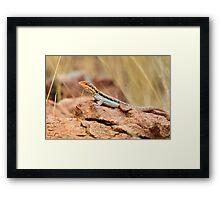 Tawny Rock Dragon Framed Print