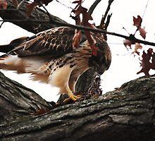 Redtail Hawk's Successful Hunt by Thomas Mckibben
