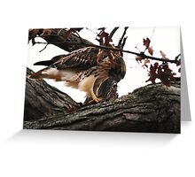 Redtail Hawk's Successful Hunt Greeting Card