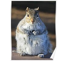 I'm not fat I'm insulating for the winter Poster