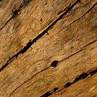 Wood by fg-ottico