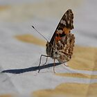 The Australian Painted Lady Butterfly on Butterfly Tablecloth by retroboho
