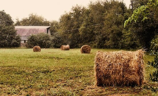 Bales Along the Tree line by © Bob Hall