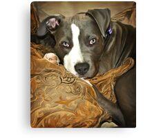 Baby Blu Canvas Print