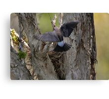 Nest Hover Canvas Print